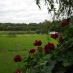 Uitzicht vanuit de tuin Vakantie Meerlo