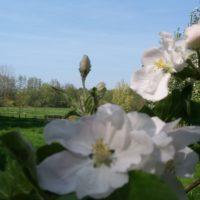 Vakantie Meerlo voorjaar tuin